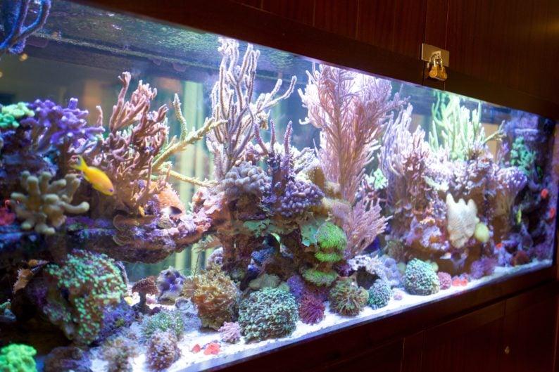 Hotel zum Löwen - Salzwasser Aquarium im Spa