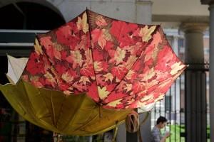 Real Jardin Botanico - amüsante Schirme am Eingang