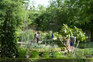 Zum Real Jardin Botanico gehört auch ein großer Kräutergarten.