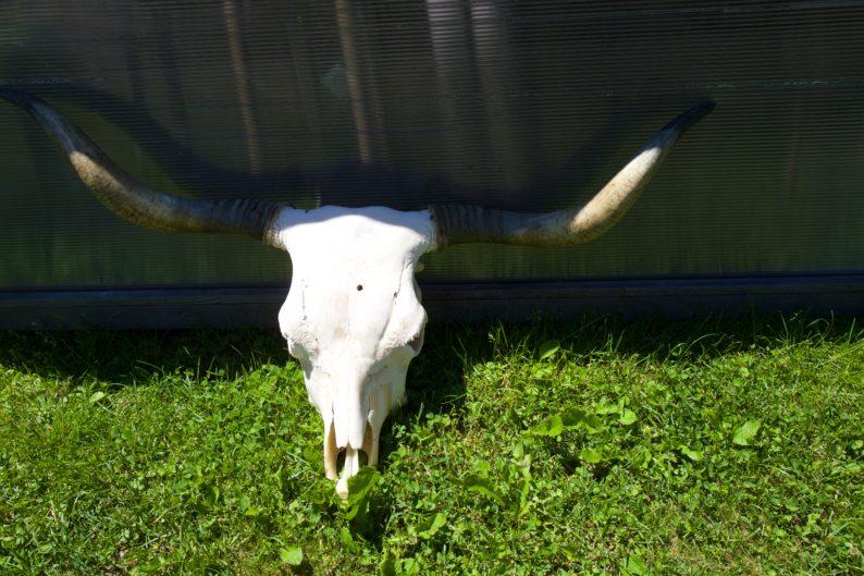 Steirerhütte - dry aged beef