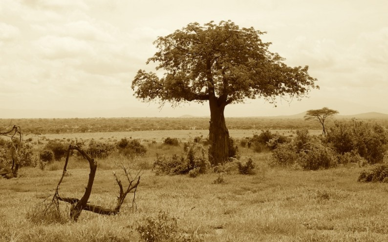 Tanzania - Ruaha NP