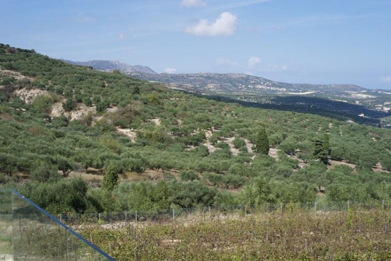 Domaine Paterianakis - Weinberge und Olivenbäume