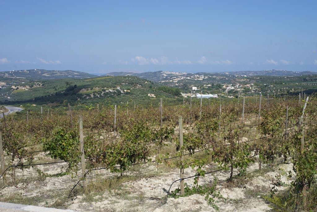 Domaine Paterianakis - die Weinberge