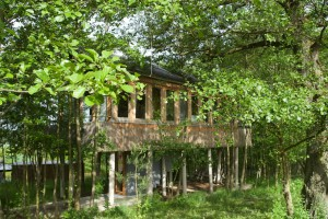 Völlig versteckt hinter Bäumen ist das Baumhaus.
