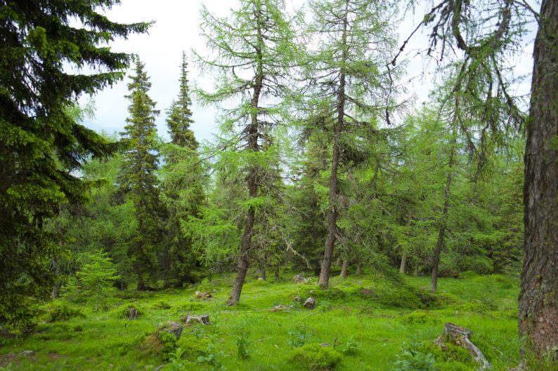 UNESCO Biospärenpark in der Nähe der Branntweineralm