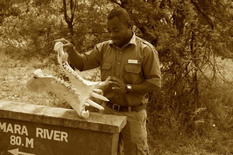 Tanzania - Flughafen Kogatende - Guide Order mit Flußpferd - Unterkiefer