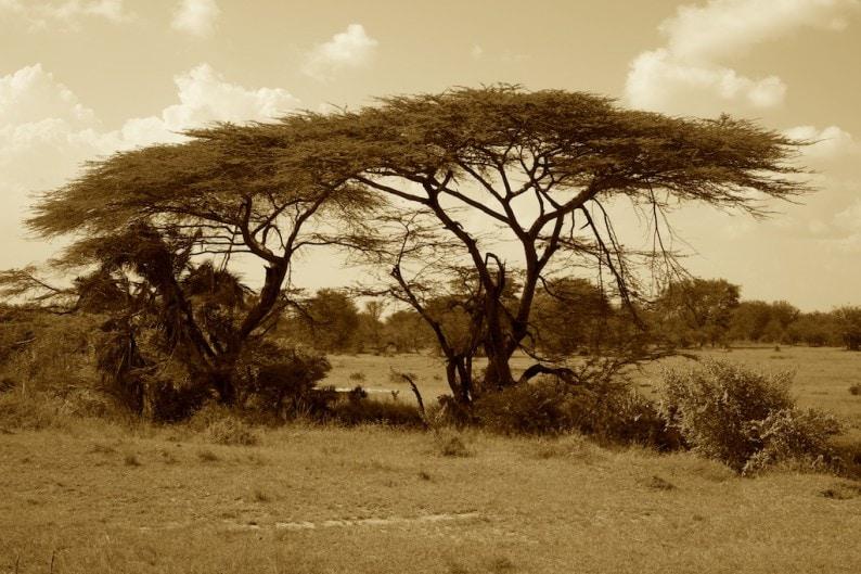 Tanzania - nördliche Serengeti