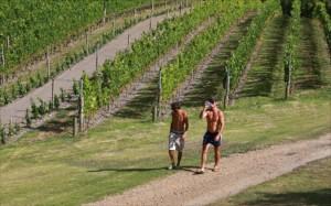 Wie man sieht, kann auf Stonyridge nicht nur Weine verkosten, sondern auch joggen.